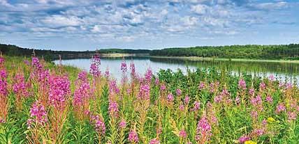 Максимальное использование растительного сырья Сибирским здоровьем